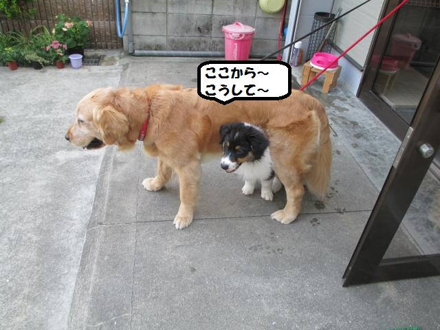 IMG_6560_convert_20130525164018.jpg