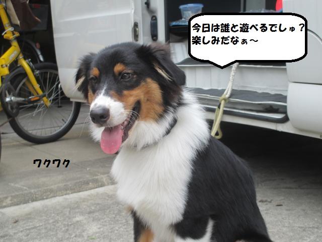 IMG_7808_convert_20130912072501.jpg