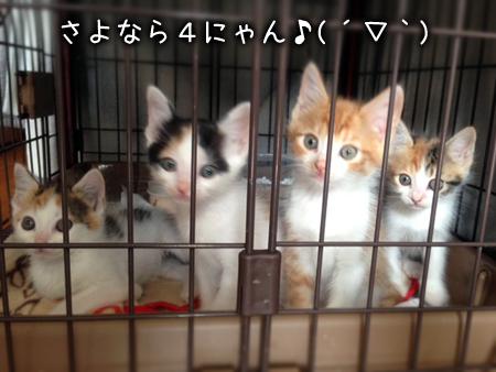 預りっ子2013.5.30