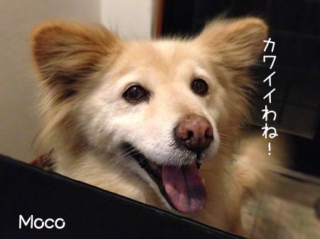 モコ2013.6.8②