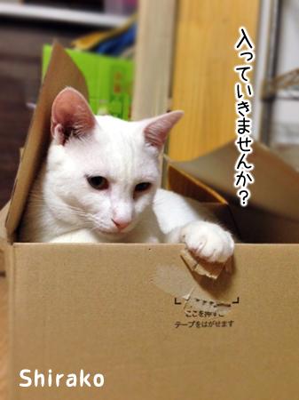 しらこ2013.7.31