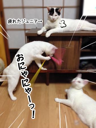 猫じゃらし2013.8.6②