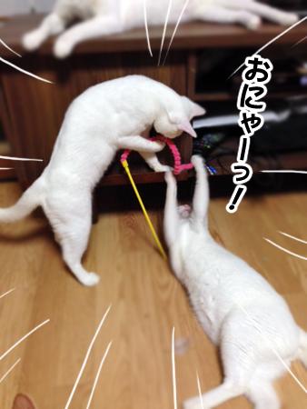 猫じゃらし2013.8.6①