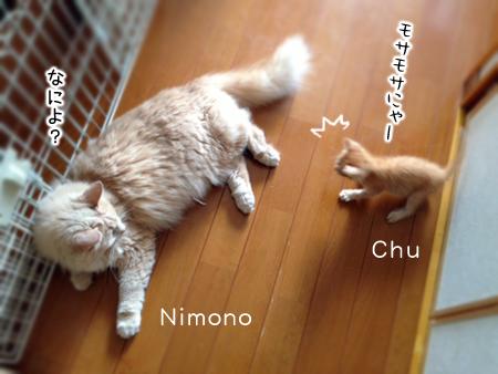 にもの&ちゅう2013.8.14