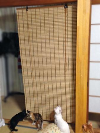 すだれ2013.8.17