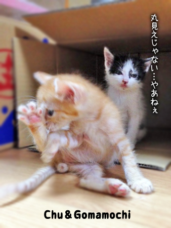 中&ごまもち2013.8.28