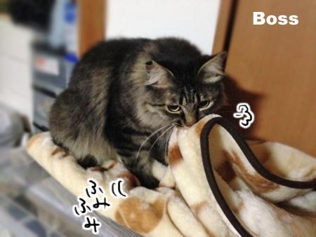 ボス2013.9.24①