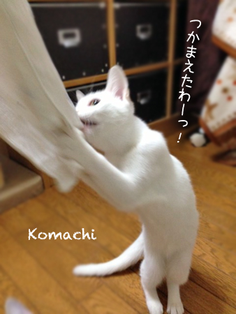 こまち2013.10.5