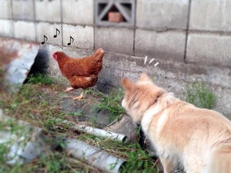 犬とニワトリ①
