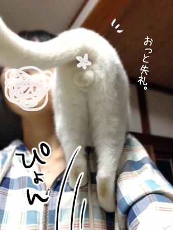 肩乗り猫2013.10.16①