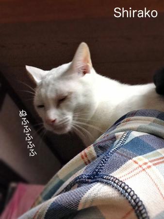 肩乗り猫2013.10.16③