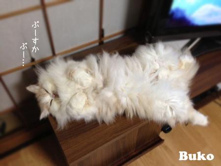 ぶーこ2013.10.26②