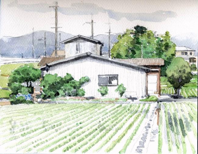 茨木野々宮の田んぼ 未完 (650x507)