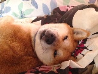 寝起きどっきり
