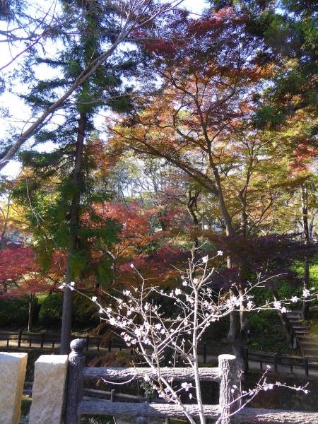 かくばん祭り2014-24