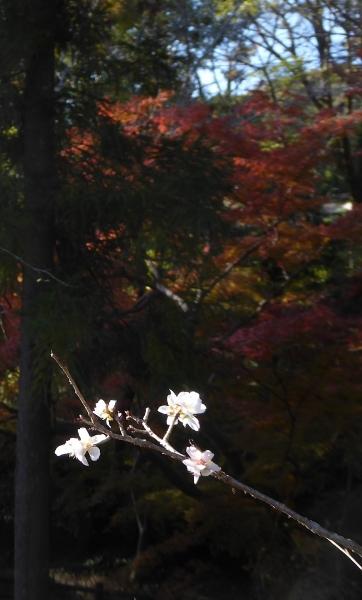 かくばん祭り2014-25