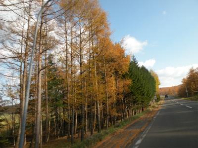 仁多峠の紅葉