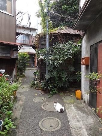 本郷菊坂10