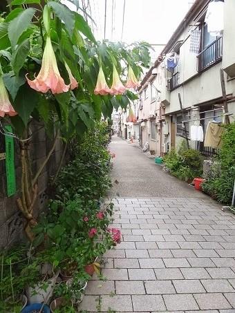 本郷菊坂11
