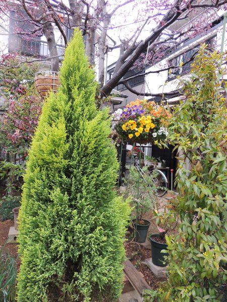 庭の花009