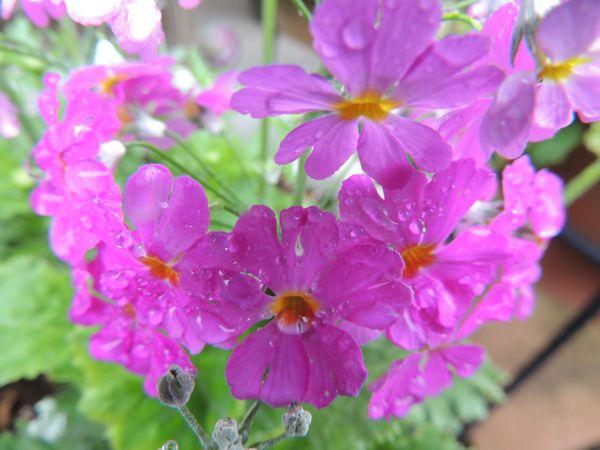 庭の花015