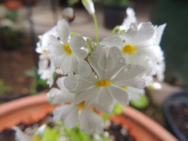 庭の花014