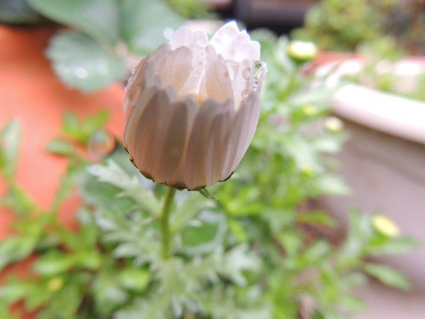 庭の花013