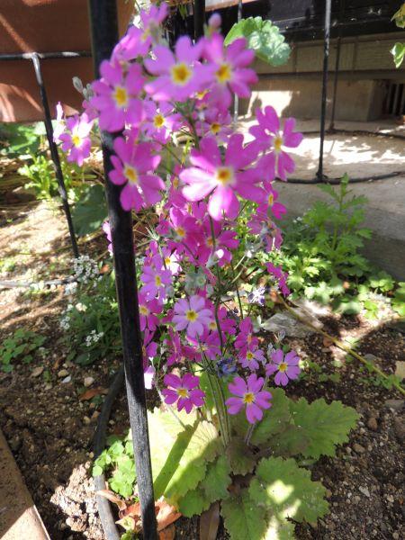 庭の花001