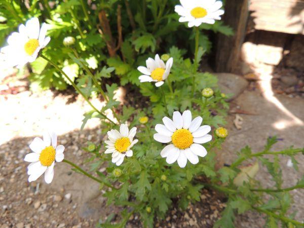 庭の花008