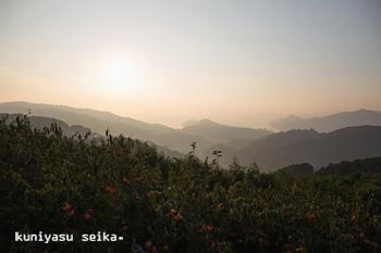 夕暮れの富士柿畑