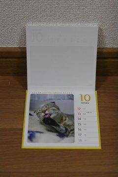 201309_koneko3.jpg