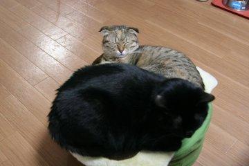 kotasuzu162.jpg