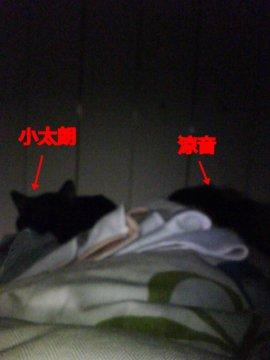 kotasuzu170.jpg