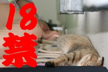 suzu359.jpg