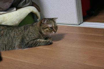 suzu426.jpg
