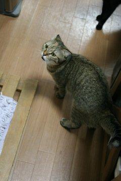 suzu460.jpg