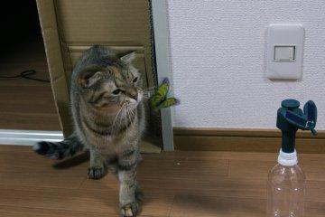 suzu469.jpg