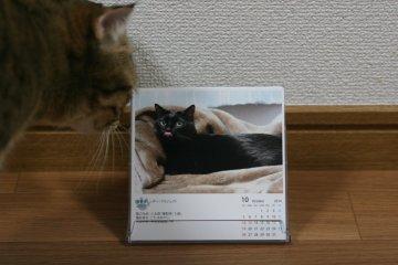 suzu513.jpg