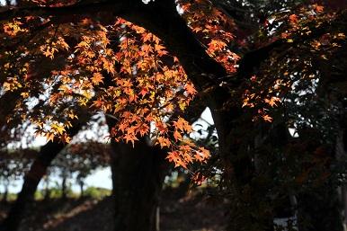 彦根城の紅葉