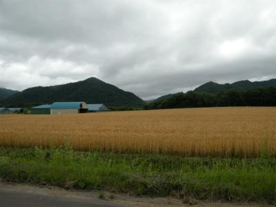 北海道はいまが麦秋