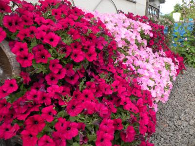 夏の花盛り