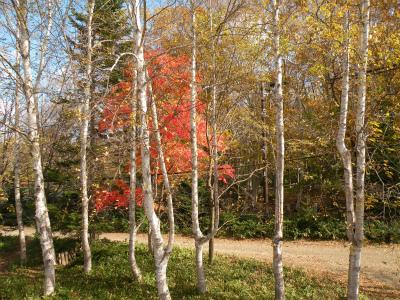 わが家周辺の紅葉