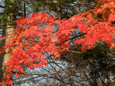 わが家周辺の秋