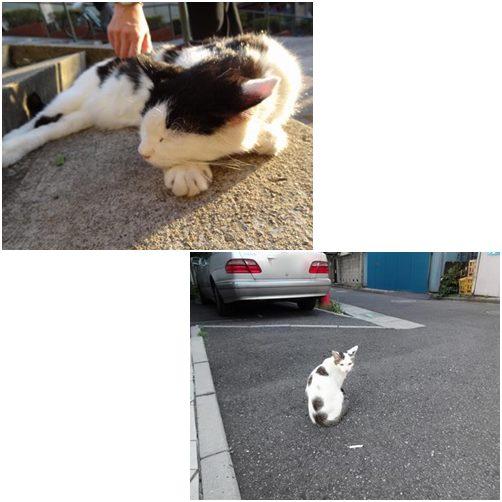 catsにゃんこ