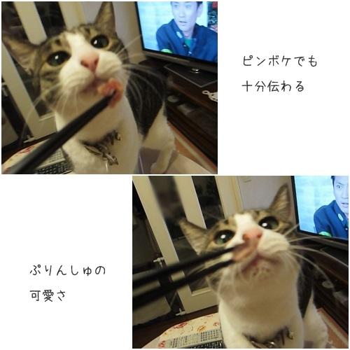 catsかわいい