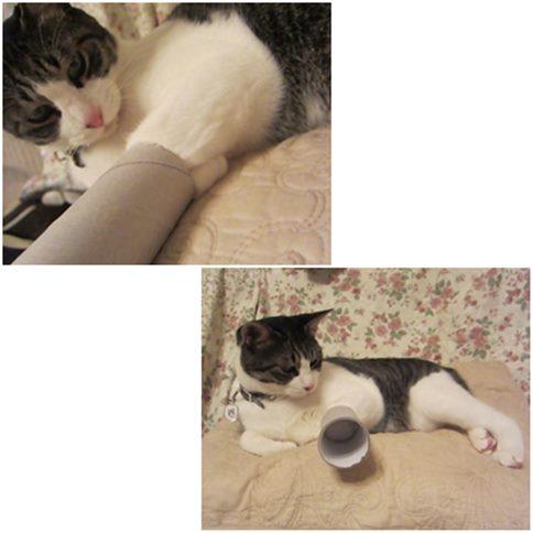 cats5_2014111720212889e.jpg