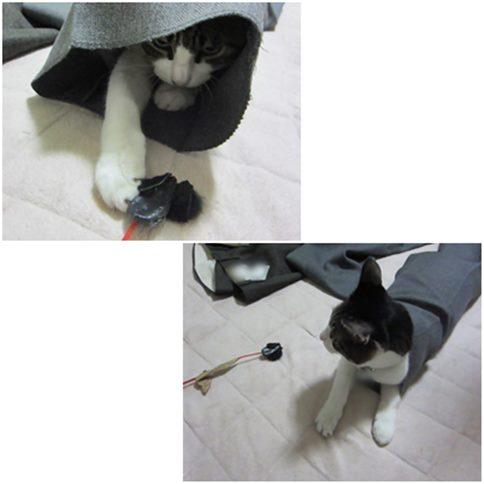 cats5_20141118193908ecb.jpg