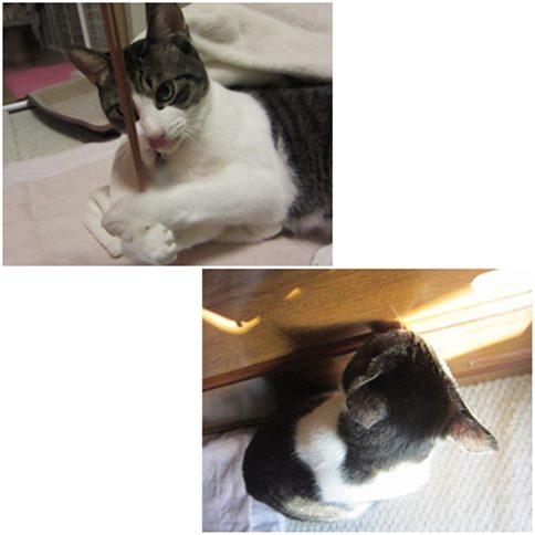 cats5_20141212202041084.jpg
