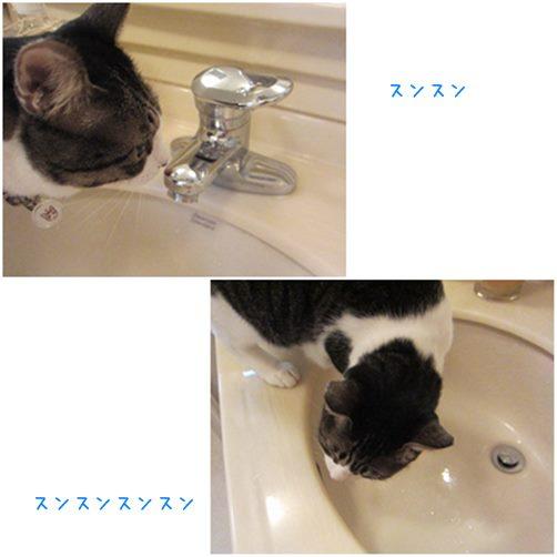 cats_2014111519062626a.jpg