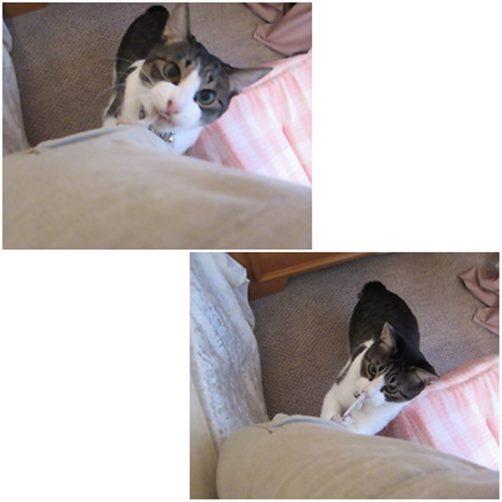 cats_201411151943513d1.jpg